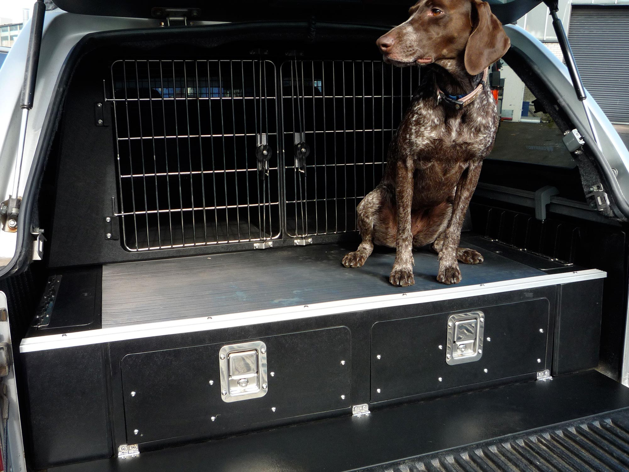 Dogtran Experts In Dog Van Conversions For Owners Organisations